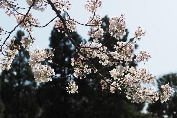 白鳥庭園 散策_a0098746_161427100.jpg
