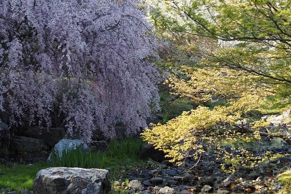 白鳥庭園 散策_a0098746_16153079.jpg
