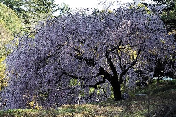 白鳥庭園 散策_a0098746_1615841.jpg