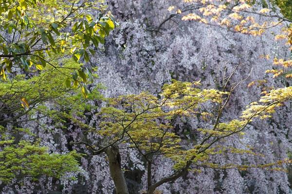 白鳥庭園 散策_a0098746_16171435.jpg