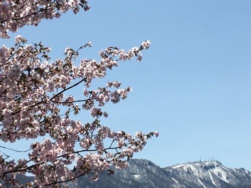 手稲の桜と形見の着物_e0326953_23011165.jpg