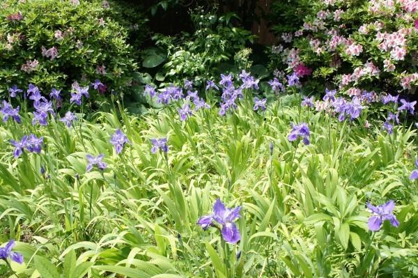 庭の風景_a0133859_15530762.jpg