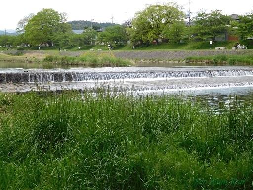 新緑の賀茂川_a0164068_23345812.jpg