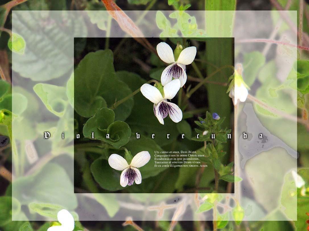 f0198771_23580266.jpg