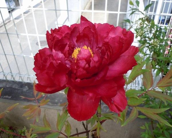 野菜もいいが、やはり今咲く花がいい_b0102572_143221.jpg