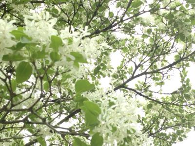 キラキラの新緑ウィーク***_e0290872_20504198.jpg