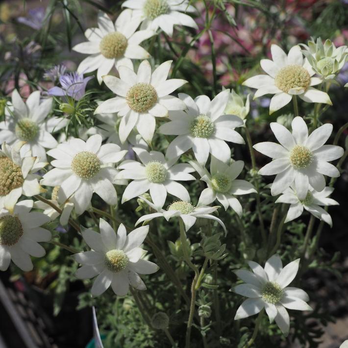 ナチュラル系の花材が入荷_a0292194_2139446.jpg