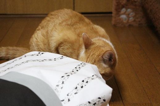 ぎんネコ☆はうすの  こどもの日①_a0333195_22403316.jpg