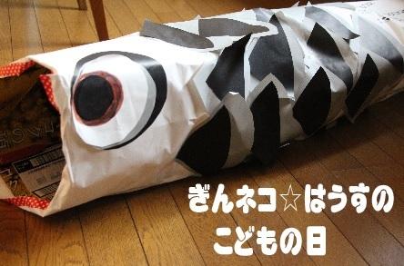 ぎんネコ☆はうすの  こどもの日①_a0333195_22452472.jpg