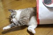 ぎんネコ☆はうすの  こどもの日①_a0333195_22531894.jpg