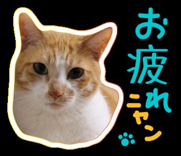 ぎんネコ☆はうすの  こどもの日①_a0333195_23555354.png