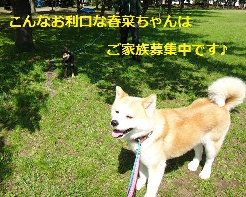 f0121712_16004451.jpg