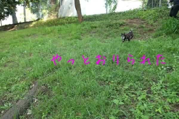 f0369014_13144674.jpg