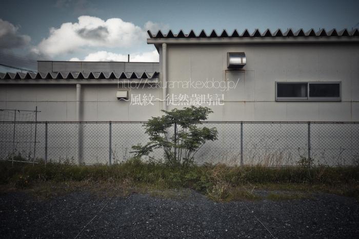 f0235723_2011264.jpg