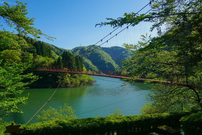新 緑 浴(富士写ケ岳)_c0220824_14363571.jpg