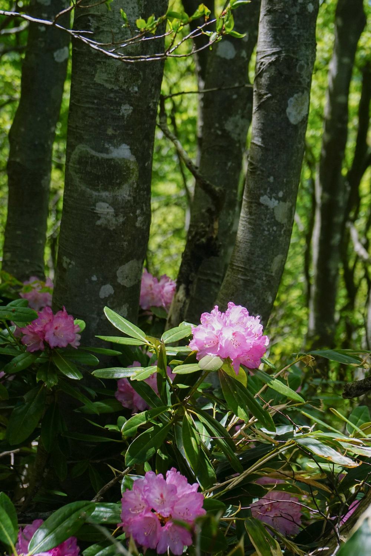 新 緑 浴(富士写ケ岳)_c0220824_14371856.jpg