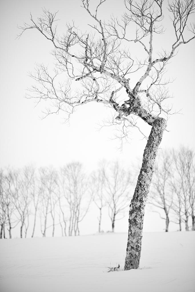 Katachi   Mt. Mokoto Hokkaido_f0050534_09425048.jpg