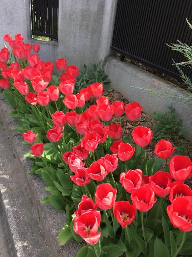 花ざかりの庭_e0359436_16124760.jpg