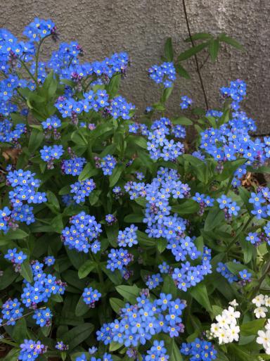 花ざかりの庭_e0359436_16124981.jpg