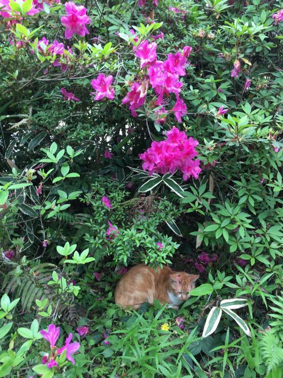 あなたがいつか話してくれた猫たちを僕らは訪ねて来た_b0060239_19354996.jpg