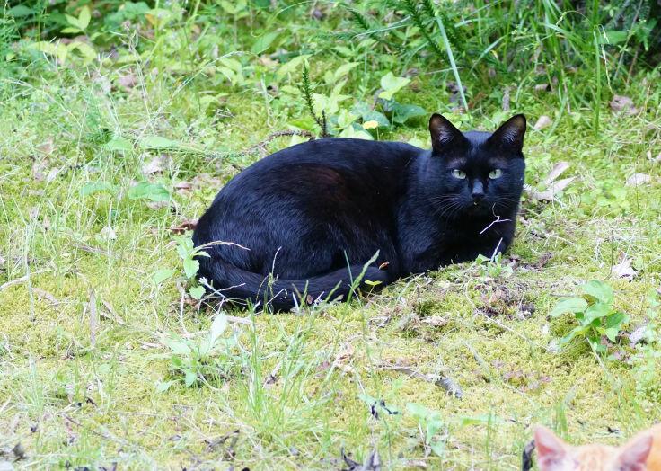あなたがいつか話してくれた猫たちを僕らは訪ねて来た_b0060239_20215881.jpg