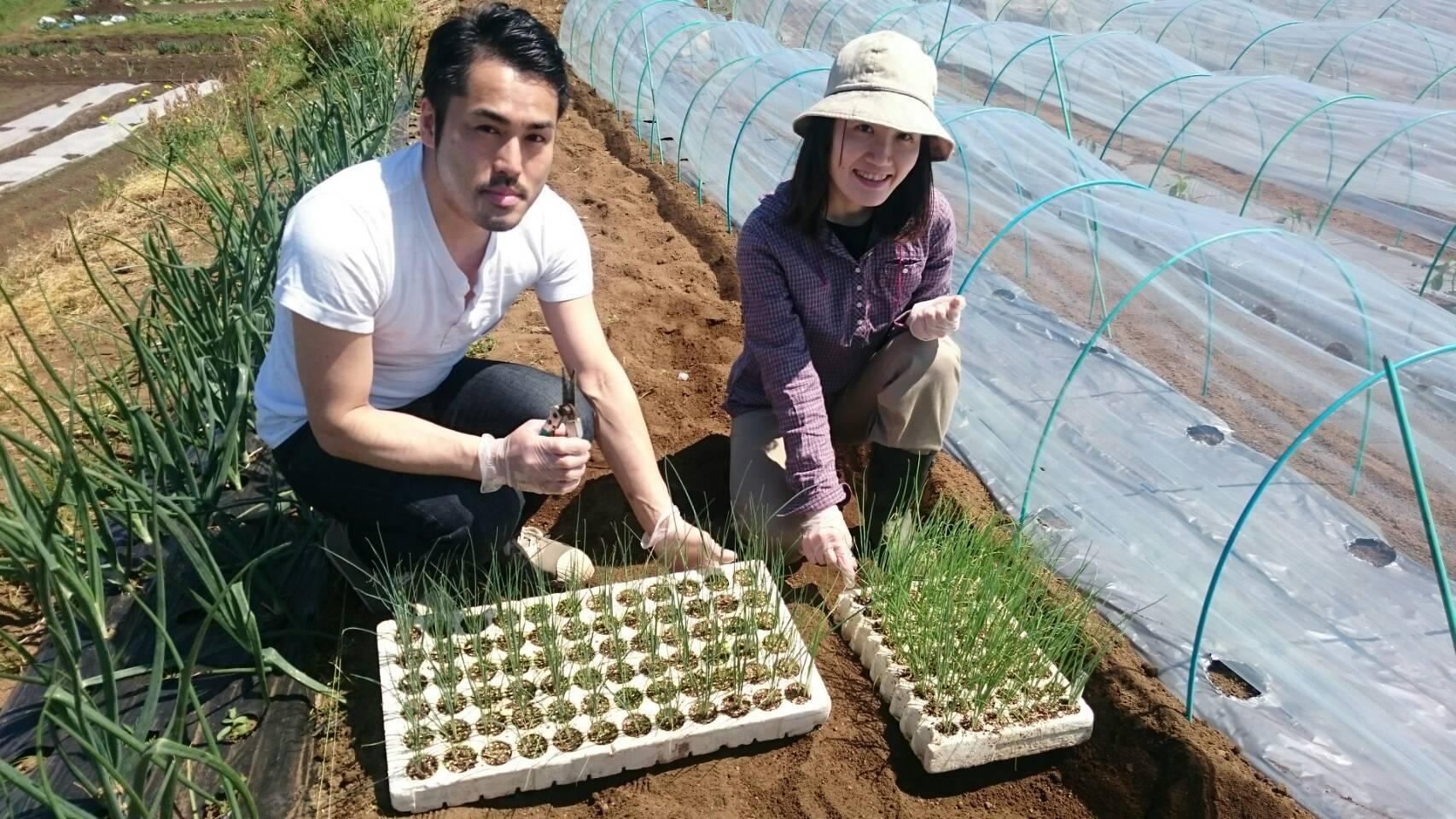 今朝は長葱とリーキの仮植です本日も沢山の畑ボランティアの方々 ありがとうございます_c0222448_11343912.jpg