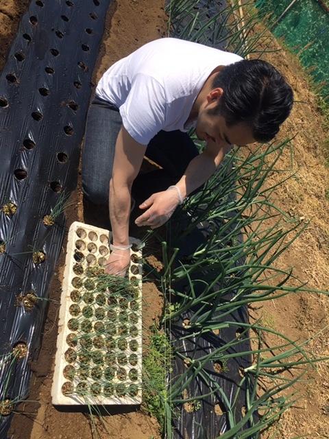 今朝は長葱とリーキの仮植です本日も沢山の畑ボランティアの方々 ありがとうございます_c0222448_11374732.jpg