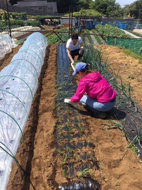 今朝は長葱とリーキの仮植です本日も沢山の畑ボランティアの方々 ありがとうございます_c0222448_11380477.jpg