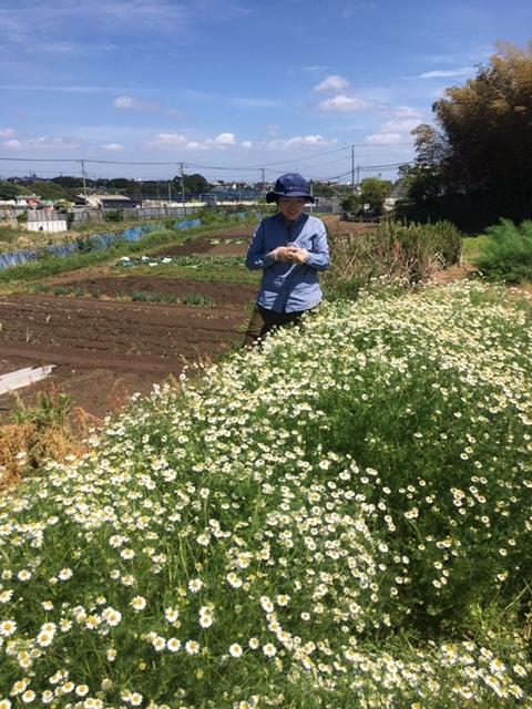 今朝は長葱とリーキの仮植です本日も沢山の畑ボランティアの方々 ありがとうございます_c0222448_11392098.jpg