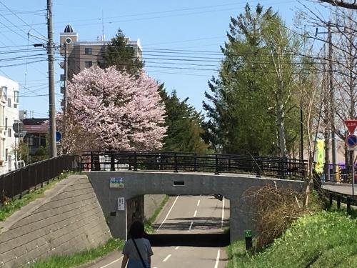 「白石こころーど」の桜と野球観戦_e0326953_21282984.jpg