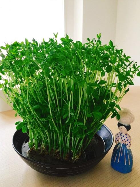 我が家の韓国料理教室 今回のテーブル装花は野菜!_b0060363_23132592.jpg