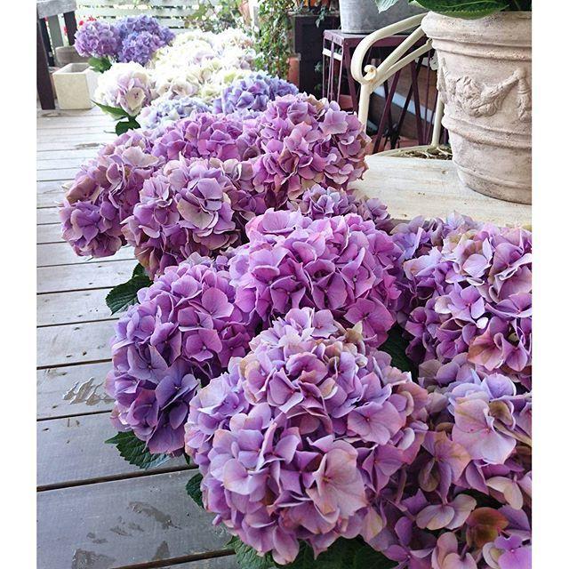 2017 MOTHER\'S DAY・・・5・14(日曜日)_b0137969_06140742.jpg