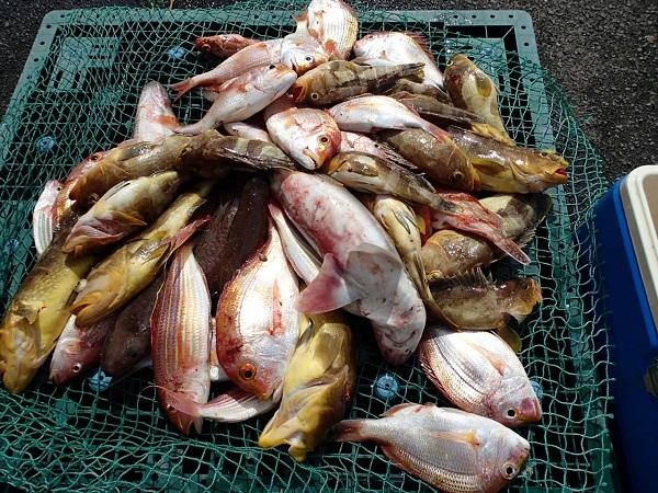 いまりマリーナの春の釣り大会♪_a0077071_13125378.jpg