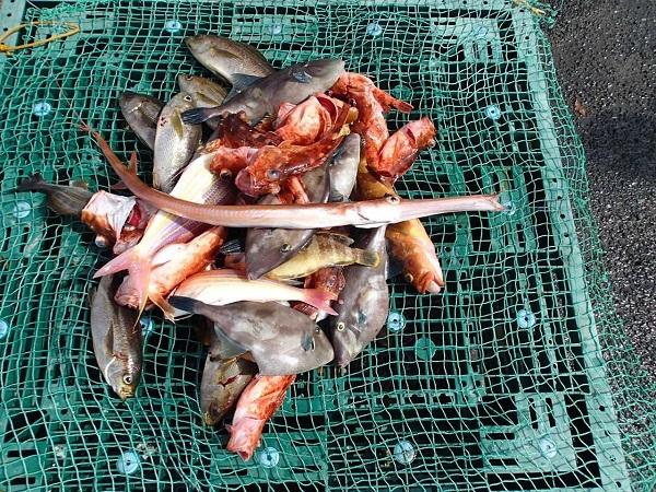 いまりマリーナの春の釣り大会♪_a0077071_13185696.jpg