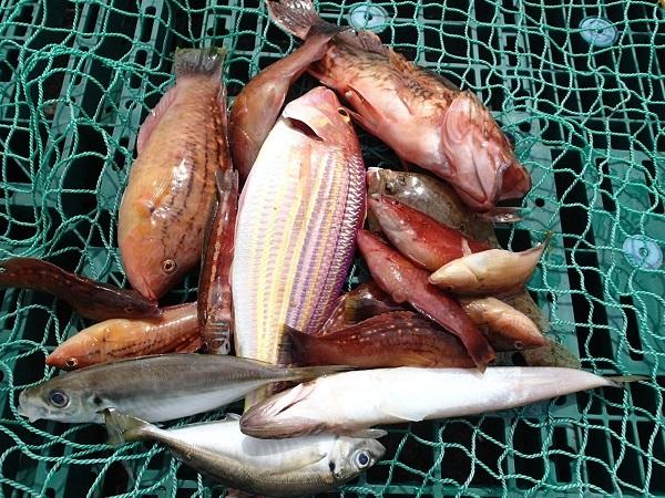 いまりマリーナの春の釣り大会♪_a0077071_13221750.jpg
