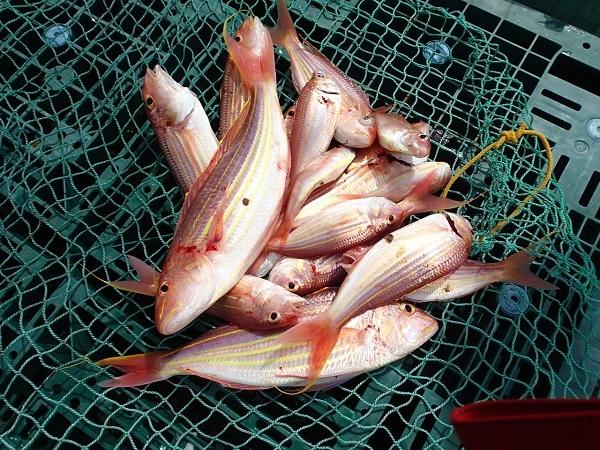 いまりマリーナの春の釣り大会♪_a0077071_13235233.jpg