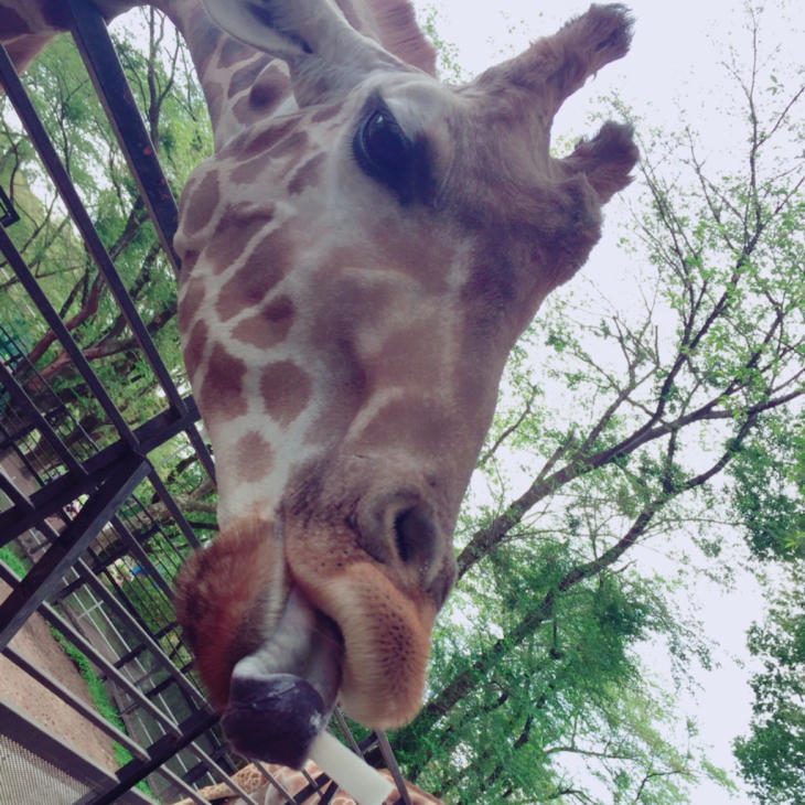 動物園やら陶器市やら本日のミヤラジやら_a0127284_04424630.jpg