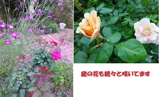b0266191_17594594.jpg