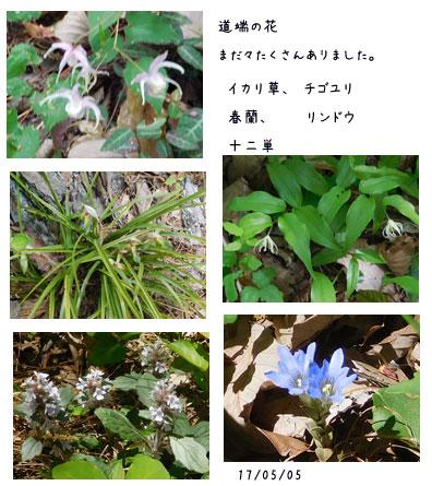 能山から八重山をハイキング_c0051105_16315811.jpg