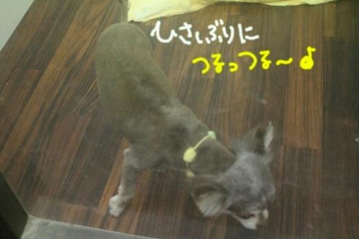 浅草_b0130018_14175269.jpg