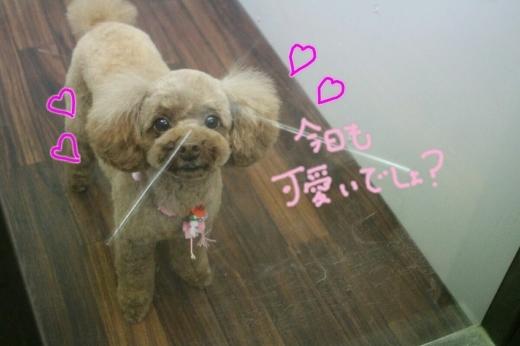 浅草_b0130018_14221402.jpg