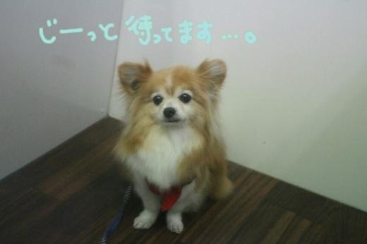 浅草_b0130018_19042187.jpg