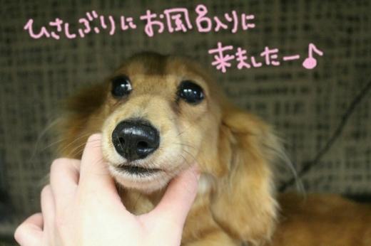 浅草_b0130018_19132283.jpg
