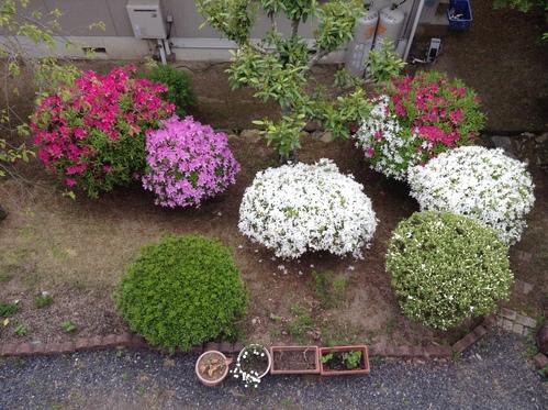 我が庭・5月の風景_e0083820_10372025.jpg