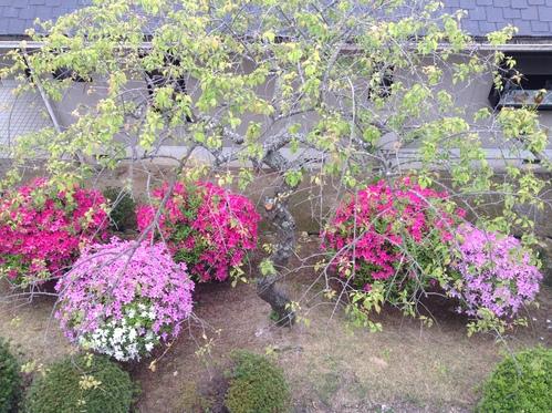 我が庭・5月の風景_e0083820_10385092.jpg