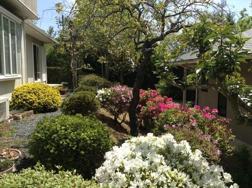 我が庭・5月の風景_e0083820_10401388.jpg