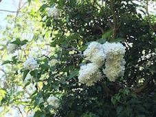 庭の花_f0123922_234664.jpg