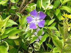 庭の花_f0123922_23473538.jpg