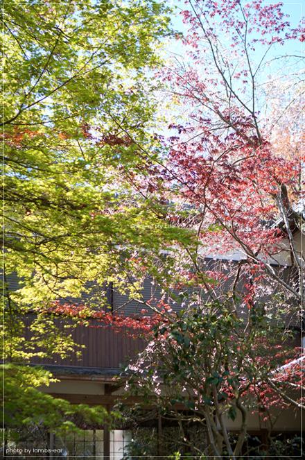 桜と風薫る京都*_f0151946_0315989.jpg
