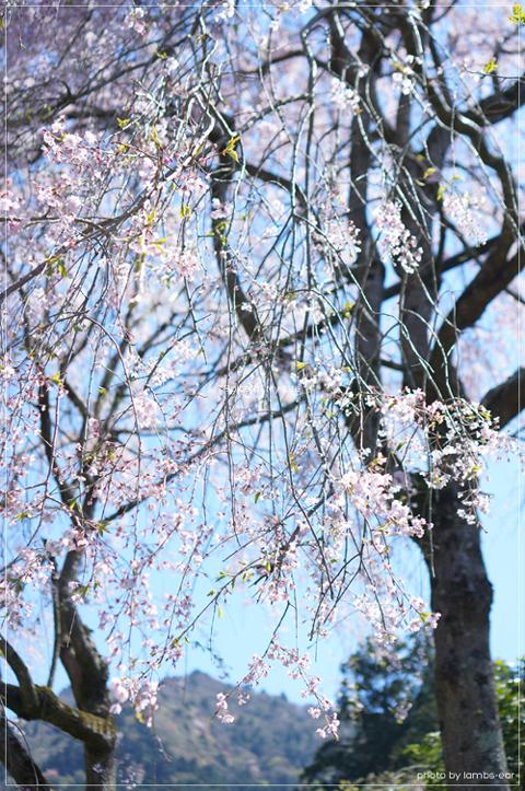 桜と風薫る京都*_f0151946_0323710.jpg